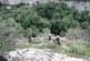 sentiero5.JPG