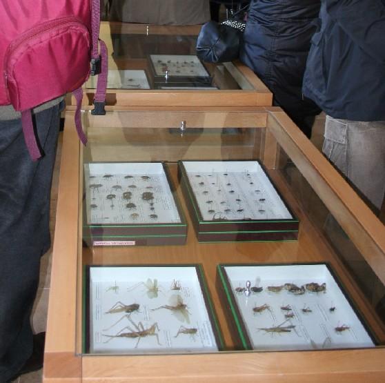 Mostra: insetti della Murgia.