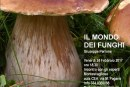 Il colorato mondo dei funghi