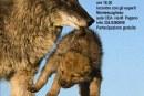 Al lupo al lupo
